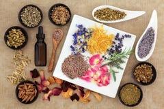 Herbes magiques et médicinales Photo stock