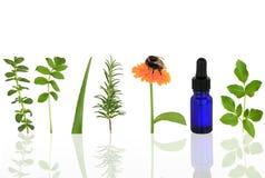 Herbes médicinales et culinaires Images stock