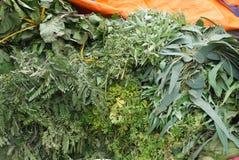 Herbes Medicative et parfumées photo stock