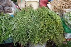 Herbes Medicative et parfumées photos libres de droits