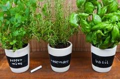 Herbes mises en pot avec des labels Image stock