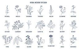 Herbes naturelles pour des remèdes de toux illustration stock