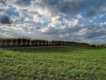 Herbes nuageuses Photo libre de droits