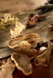 Herbes orientales de médecine Photographie stock