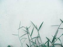 Herbes par le mur Images libres de droits