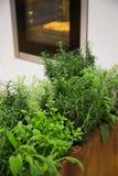Herbes pour la cuisson Images stock