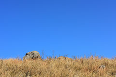 Herbes sèches et roche Photo libre de droits