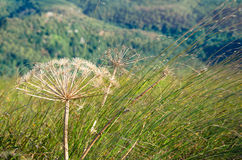 Herbes sèches sur la montagne Photo stock