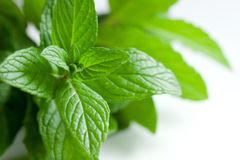 Herbes sélectionnées fraîches sur le blanc Photo libre de droits