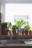 Herbes s'élevant dans des pots de fleurs à l'évier de cuisine Photo libre de droits