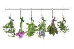 Herbes s'arrêtant et séchant Image stock