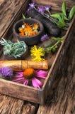 Herbes saines de groupe Photo stock