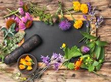 Herbes saines de Motley Photos stock