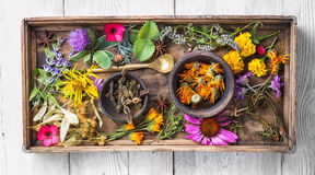 Herbes saines de Motley Photographie stock