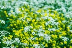 Herbes sauvages Photographie stock libre de droits