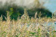 Herbes sauvages Photographie stock