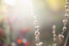 Herbes sauvages dans la forêt au coucher du soleil Photo stock