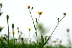 Herbes sauvages dans le mouvement Photo libre de droits