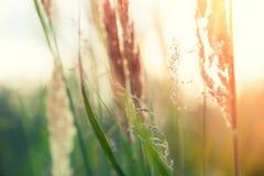 Herbes sauvages dans une forêt au coucher du soleil Photo libre de droits