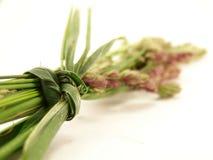 Herbes sauvages empaquetées Photo libre de droits