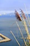 Herbes soufflant dans le vent image libre de droits
