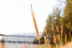 Herbes sur la montagne pendant le coucher du soleil Photographie stock