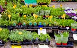 Herbes sur la stalle du marché Image stock