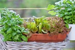 Herbes sur le balkony Photographie stock libre de droits