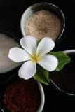 Herbes thaïes Photographie stock