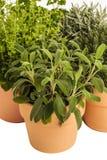 Herbes thym, lavande, origan, sauge de pot Images stock