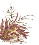 Herbes tirées par la main Image stock