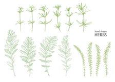 Herbes tirées par la main Images libres de droits