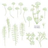 Herbes tirées par la main Graphique d'encre Images libres de droits