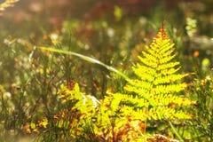 herbes Usines de forêt Fond de nature d'automne herbal photo libre de droits