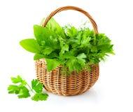 Herbes vertes dans le panier tressé image libre de droits