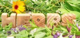 Herbes vertes et fraîches Image libre de droits