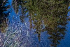 Herbes vertes Sit Below Crystal Clear Water photos stock
