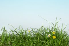 Herbeux Image stock