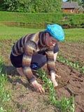 Herbicida Fotografía de archivo libre de regalías