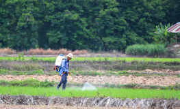 Herbicide spraying of farmers fields. In thai Royalty Free Stock Image