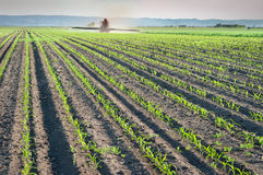 Herbicides spraying Royalty Free Stock Image