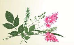 Herbier Photo libre de droits