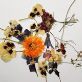 Herbier images stock