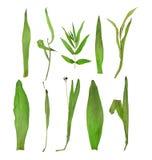 Herbier illustration stock