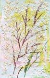 Herbier avec les herbes et les feuilles vertes de pré d'été Photographie stock libre de droits