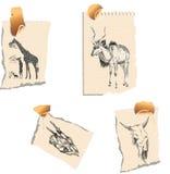 herbivor stock illustrationer