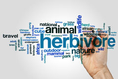 Herbivore word cloud. Concept on grey background Stock Images