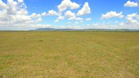 Herbivore zwierzęta pasa w sawannie przy Africa zbiory