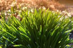 Herboren aard - de lente Stock Afbeeldingen