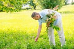 herboriste photos libres de droits